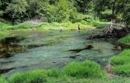 Pilot Project Reduces Hydrilla Threat in Eno River
